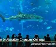 Liat Ikan Di Akuarium Charaumi Okinawa