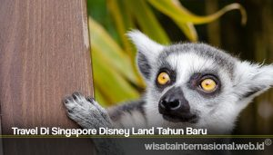Travel Di Singapore Disney Land Tahun Baru