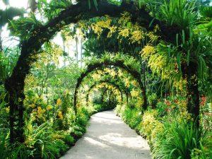 Singapore-Botanic-Gardden
